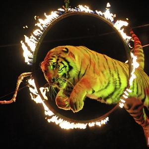 Цирки Опалихи