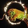 Цирки в Опалихе